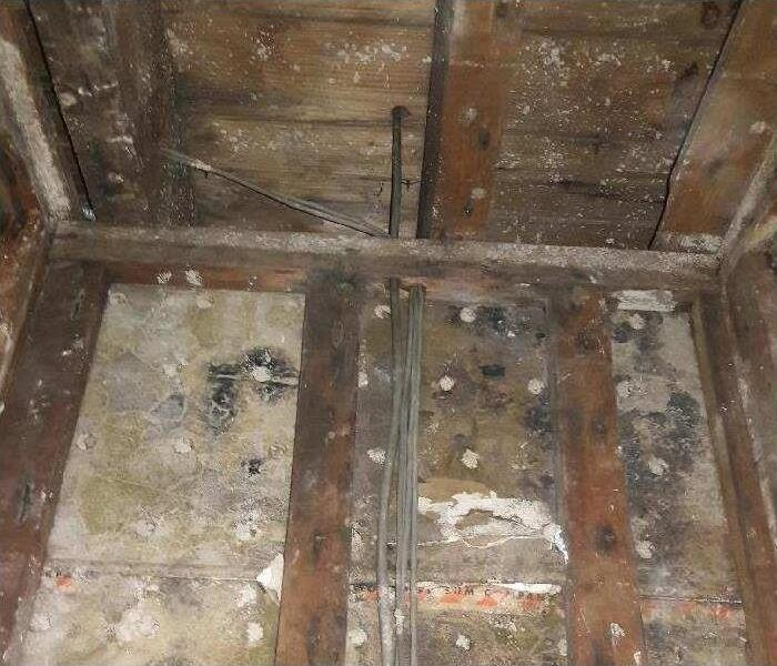 Mold Remediation Will Your Insurance Cover Damage From Mold?