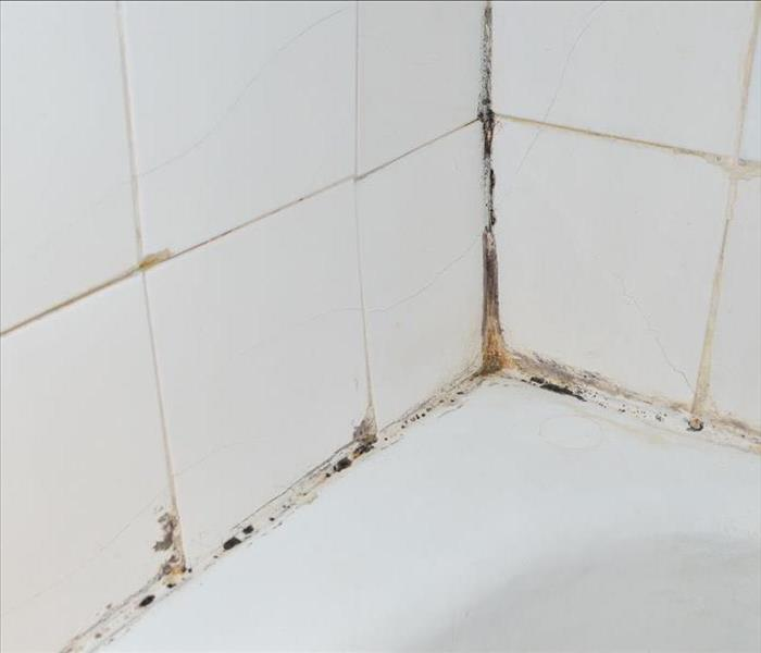 Grout of a shower with mold